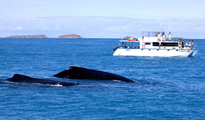 Avistamiento de ballenas jubarte en Morro de San Pablo