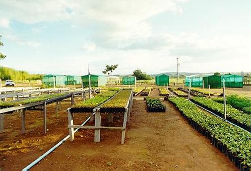 Jardin bot nico de brasilia for Vivero el botanico