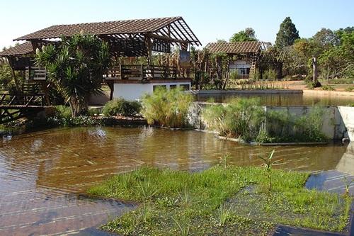 Jardin bot nico de brasilia for Informacion sobre el jardin botanico