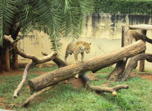Jardím zoológico de Brasilia