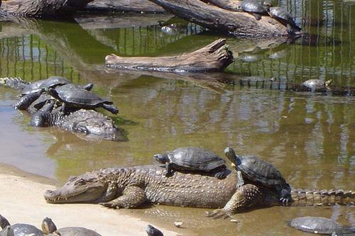 Jardim zoológico de Brasilia