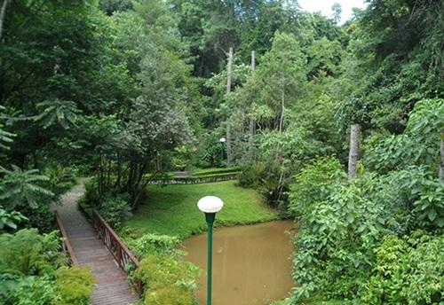 Bosque Alemao