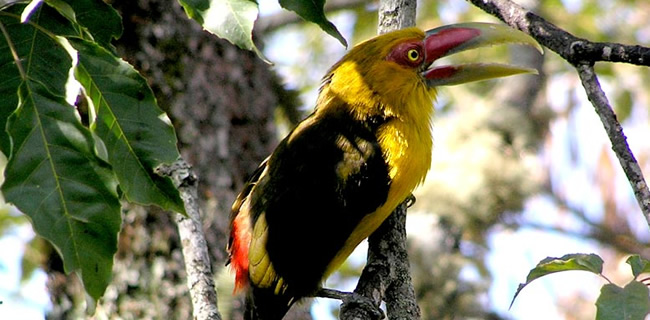 Avistamiento de aves en Brasil