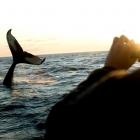 Avistamiento de ballenas en Brasil