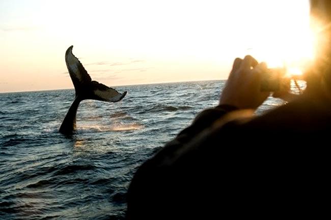 Principales sitios de avistamiento de ballenas en Brasil