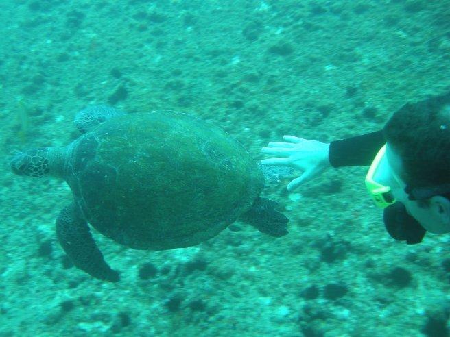 Buceo en Isla Ancora