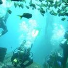 Puntos de buceo en Salvador de Bahía