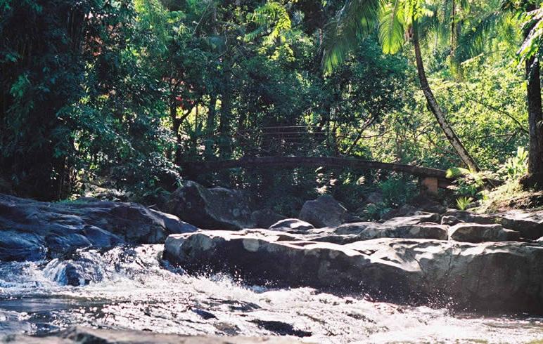 Bosque en Parque Aquático Hidromineral Cascata Carolina