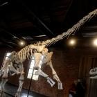 Descubrimiento científico brasileño de un nuevo fósil