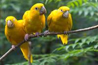 parque de las aves