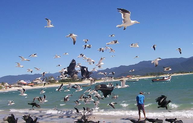 Playa Pinheira en Guarda do Embaú
