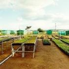 El jardim botánico de Brasilia