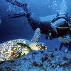 Turismo ecológico, una forma de cuidar la naturaleza de Fernando de Noronha