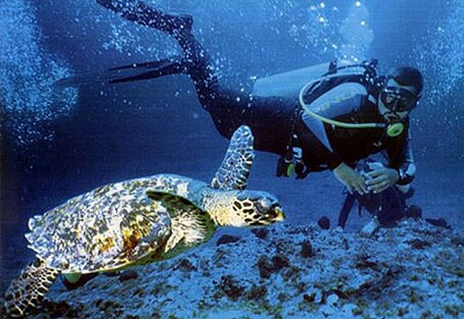 Las diferentes actividades del turismo ecológico en Noronha