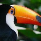 Turismo en Foz de Iguazú