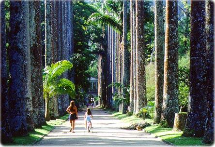 Lugares de Rio de Janeiro para visitar en familia: Jardín Botánico