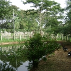 Zoológico Bosque Guaraní en Foz de Iguazú